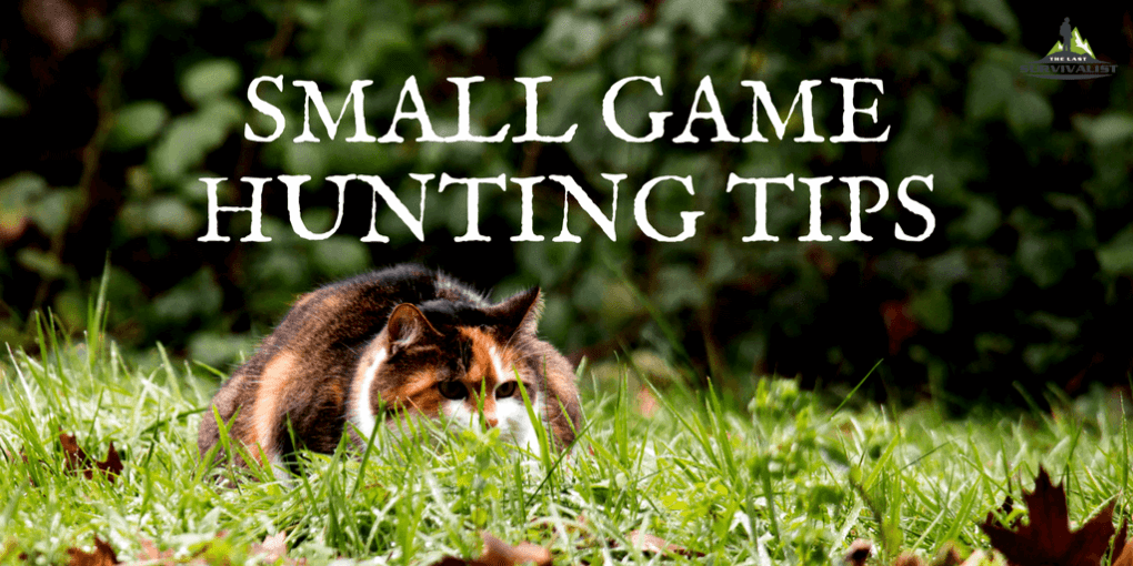 Small Game Hunting Tips